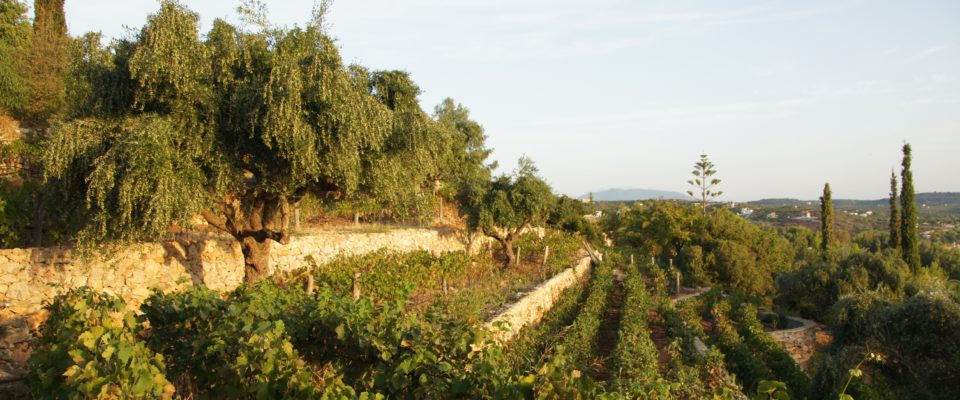Weinberg_Lacules